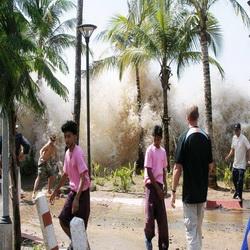 Поведение при цунами